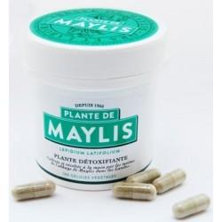 Lepidium capsules - Maylis Abbey